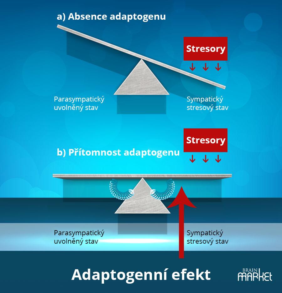 adaptogenni-efekt