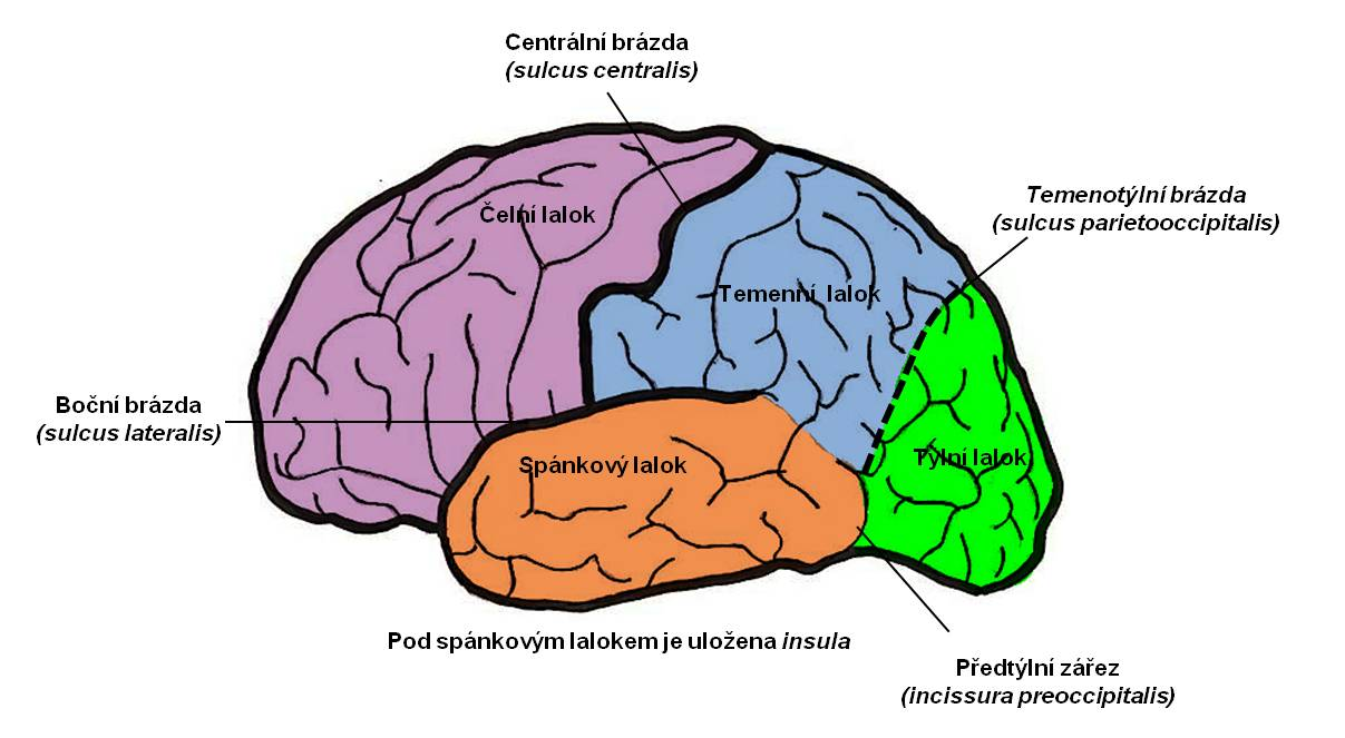 mozkovakura